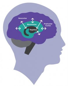 NeoCortex Mammalian_Brain Reptilian_Brain Prefrontal_Cortex Human_Brain Christine_Comaford